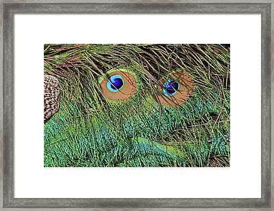 Oscar The Grouch Framed Print
