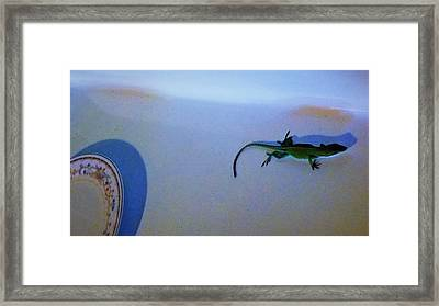 Framed Print featuring the photograph Oscar The Lizard by Denise Fulmer