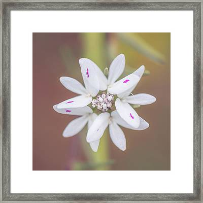 Framed Print featuring the photograph Osmadenia Tenella by Alexander Kunz