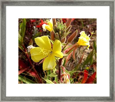 Oso Flaco Yellow Framed Print