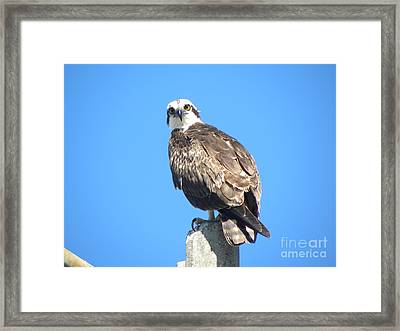 Framed Print featuring the photograph Osprey 1 by Terri Mills