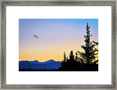 Osprey Against The Sunset Framed Print