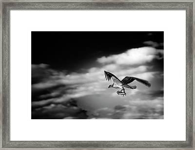 Osprey Catch Of The Day Framed Print