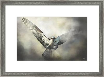 Osprey Framed Print by Daniel Eskridge