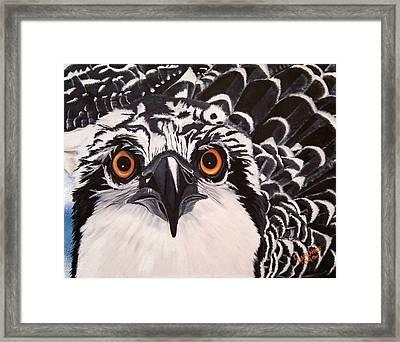 Osprey Eyes  Framed Print by Debbie LaFrance