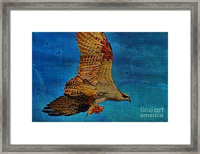 Osprey Fish Eagle Framed Print