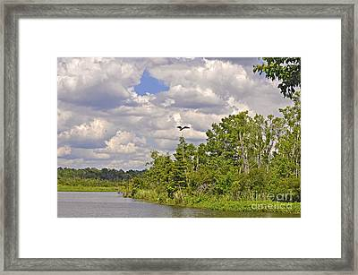 Osprey From Flight Framed Print by Donnie Smith
