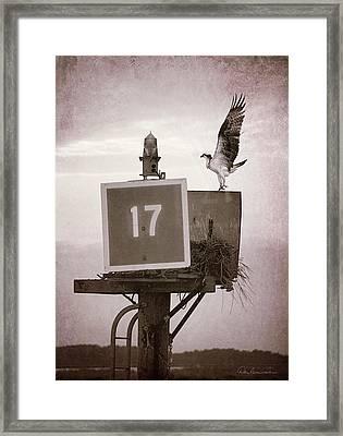 Osprey Landing On Channel Marker 17 Framed Print