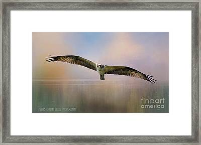 Osprey Over The Shenandoah Framed Print