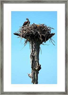 Osprey Point Framed Print by Karen Wiles