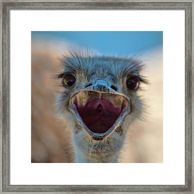 Framed Print featuring the photograph Ostrich Big Mouth by Dan McManus