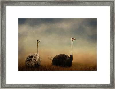 Ostrich Couple Framed Print