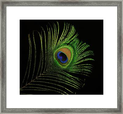Ostrich Feather Tip Eye Framed Print