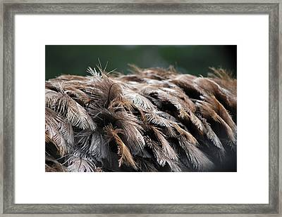 Ostrich Feathers Framed Print by Teresa Blanton