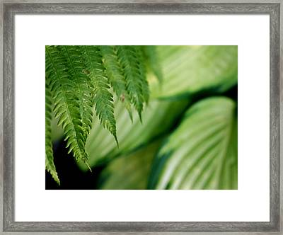 Framed Print featuring the photograph Ostrich Fern And Hosta by Diane Merkle