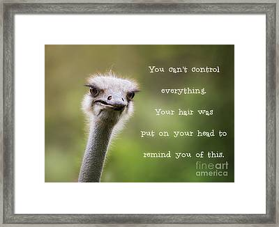 Ostrich Having A Bad Hair Day Framed Print
