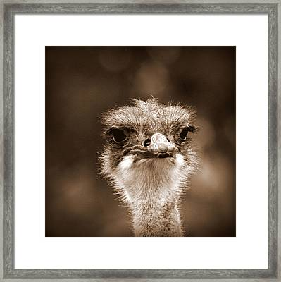 Ostrich In Sepia Framed Print by Tam Graff