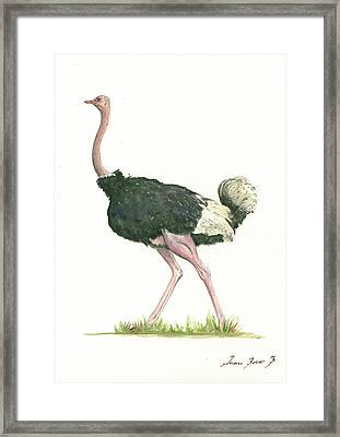 Ostrich Framed Print by Juan Bosco