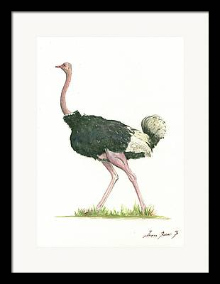 Ostrich Paintings Framed Prints
