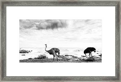 Framed Print featuring the photograph Ostrich Pair Beside Ocean Black And White by Tim Hester