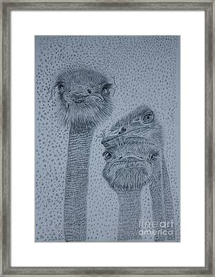Ostrich Umbrella Framed Print
