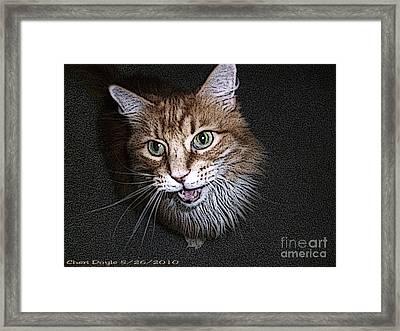 Otis The Orange Kitty Framed Print by Cheri Doyle