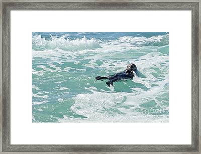 Otter At Montana De Oro Framed Print