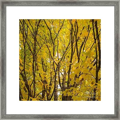 Otter Creek State Park Framed Print