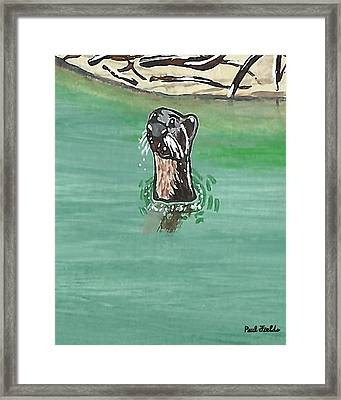 Otter In Amazon River Framed Print