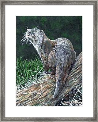 Otter On Branch Framed Print