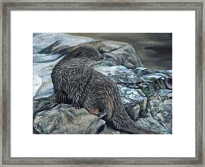 Otter On Rocks Framed Print
