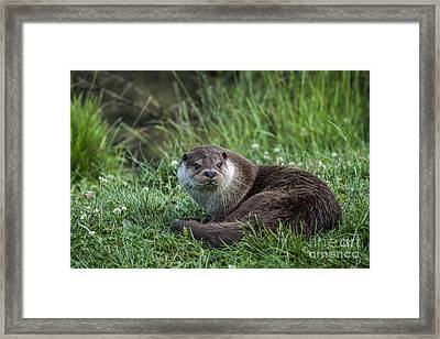 Otter On The Grass Framed Print by Philip Pound