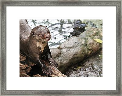 Otter Surprise Framed Print