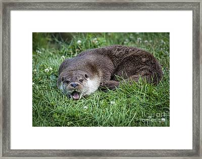 Otter With Mouth Open Framed Print by Philip Pound