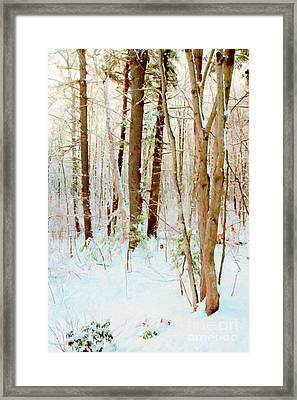 Our Backyard After The Snow Framed Print
