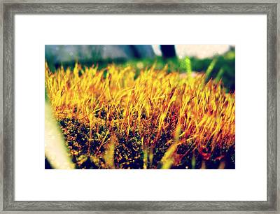 Our Big World Framed Print by Jhoy E Meade