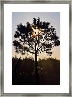 Our Borrowed Earth Framed Print