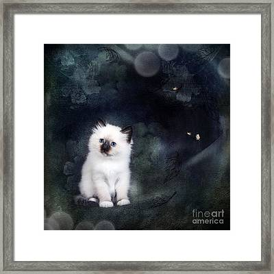 Our Cat World Framed Print