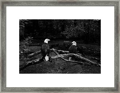 Our Disappearing Heritage Framed Print by Aimee Galicia Torres