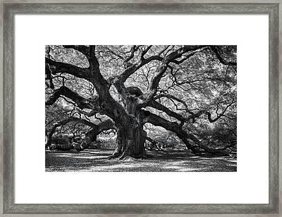 Our Elder Framed Print by Jon Glaser