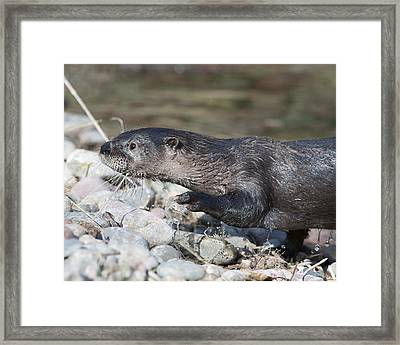Out And About Framed Print by Ken Cornett