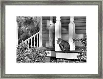 Out In The Sun Framed Print by Jan Amiss Photography