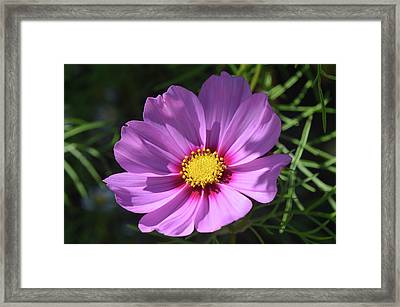 Framed Print featuring the photograph Out In The Sun. by Terence Davis