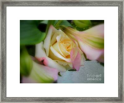 Out Like A Lamb Framed Print by Sian Lindemann