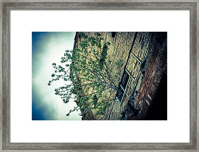 Out Of Darkness  Framed Print by Off The Beaten Path Photography - Andrew Alexander