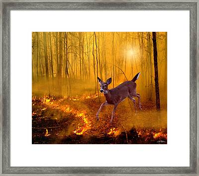 Out Of Egypt Framed Print by Bill Stephens