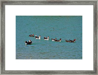 Out Of Line Framed Print by Teresa Blanton