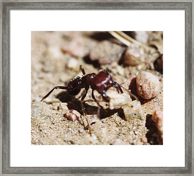 Out Of My Way Framed Print by Mike Burton
