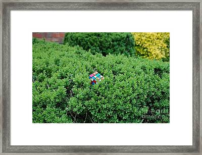 Out Of Place Framed Print by Andrew Walters
