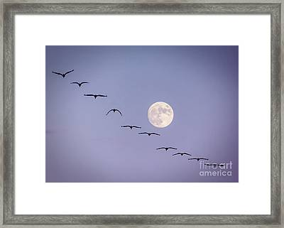 Out Of Sync Framed Print
